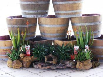 Half Barrels Make Great Planter Pots