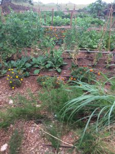 Part of the vegetable garden.