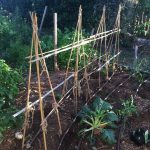 Veggie Garden Blog
